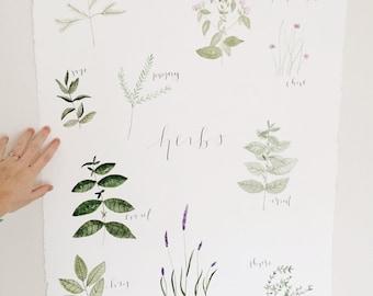 Watercolor Multiple Herb Painting