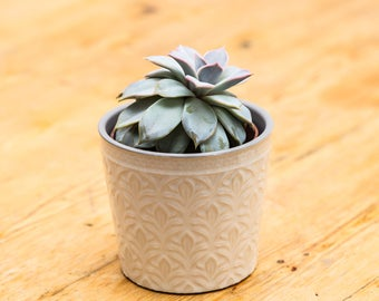 Cream ceramic patterned plant pot