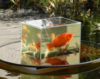 Flying aquarium by flyingaquarium on etsy for Inverted fish tank