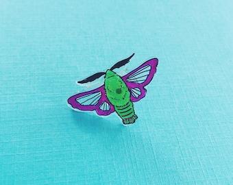 Clearwing Hummingbird Moth pin