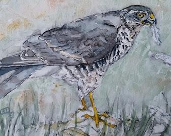 Sparrowhawk art original painting bird of prey watercolour painting wildlife art bird art hawk painting, Garden Hunter