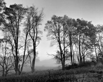 "Black and White Morning Fog, Autumn Tree Line, Tree Photo, Fog Photo, Fall Decor, Sepia, Landscape, Nature, 8x10 ""Foggy Autumn Tree Line"""