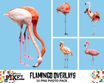 FLAMINGOS OVERLAYS, Photoshop Overlays, Birds Overlays, Animals Overlays, Real Birds, Flamingo, Summer Overlays, PNG, Instant Download