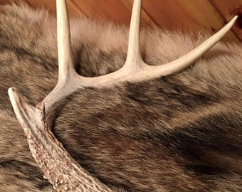Authentic Deer Antler - Natural - LARGE - Rustic - Home Decor