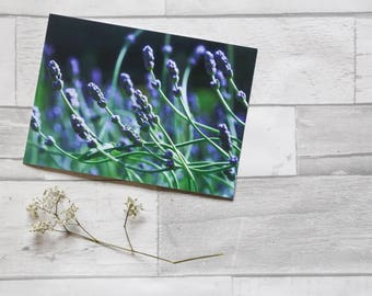 Flower photo greeting card (greeting card, birthday card, flower, nature, lavender)