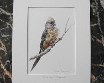 Speckled Mousebird Original Acrylic Painting, beige bird art, bird painting, bird art, original bird art, wild bird art, bird home decor