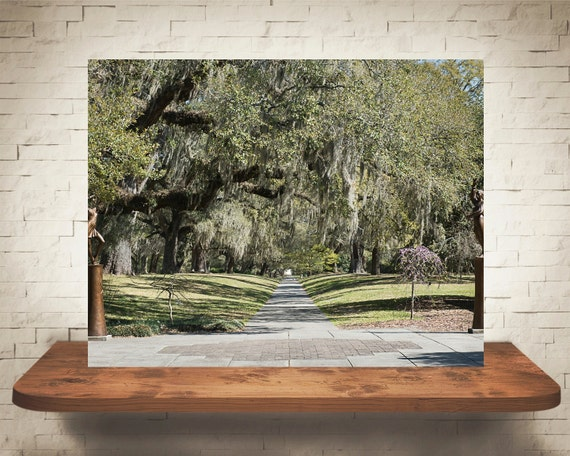 Moss Oak Tree Photograph - Landscape Photography - Fine Art Print - Home Wall Decor - Nature Pictures - Southern Trees - Green Decor - Gifts