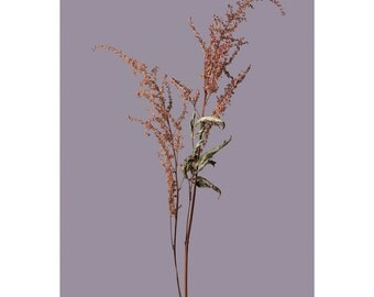 E is for Emma - Fine Art Photography, Colour Print, Nature, Reeds, Winter, Clean, Minimal