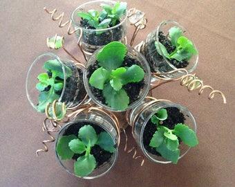 Succulent Planter / Living centerpiece / kitchen herb garden /wedding centerpiece / office plant / gift for plant lover