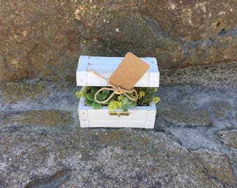 Succulent Arrangement in Enchanted Treasure Chest - 2 sizes available!