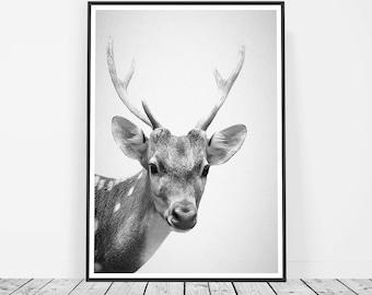Nursery Baby Deer Art Print, Woodland Nursery, Forest Animals, Nursery Deer Decor, Deer Head Nursery Forest Art, Wall Art Print Deer Antlers