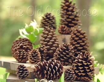 "65 Pine Cones | 4"" - 5"" Natural Pine Cones"