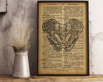 Human pelvis vintage anatomy, Medical Poster, Anatomy Print Human pelvis Medical Illustration Human pelvic bone print pelvic skeleton (HA13)