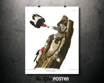 Red Headed Woodpecker - 1837 Birds of America by John James Audubon - Nature Prints, Bird Art, Bird Print, Botanical Poster Vintage