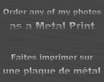 Order any my pictures as Metal Print, Aluminium,Dye Sublimation,large format,oversized,mural, wall art,ready to hang