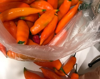 Aji Amarillo Pepper seeds 100% organic - also known as yellow chili pepper or aji escabeche