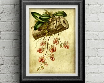 Flower print digital download 004 - office prints - antique botany poster - garden illustration - pink flower - botany illustration