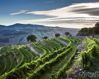 "Portugal Vineyard Photo | ""Douro Vineyard View"" | Portugal Wine Country River | Vineyard Print - Winery Photo Decor - Vineyard Wall Art"