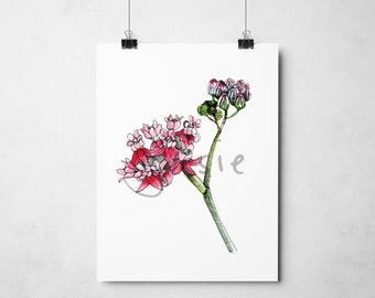 Original Print: Red Milkweed