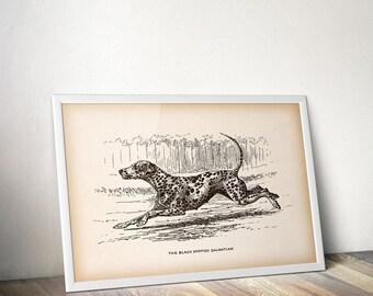 Dalmatian print, Vintage dog print, Instant download, Antique animal print, Dog illustration, Printable wall art, Art print, 8x10, 11x14 JPG