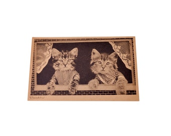 Antique Original Vintage Poland Germany Postcards Collection Memorabilia Cats Paper Stationery 1910-s