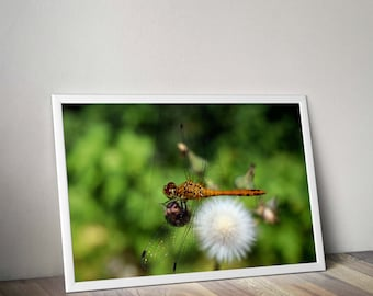 Original macro photograph of a dragonfly  taken in Corsican
