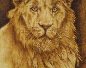 Lion Portrait Wood burning Pyrography