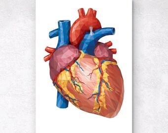 Low poly anatomical heart print Cardiologist gift Anatomy chart LPA009