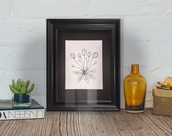 Black and white print flower illustration honesty