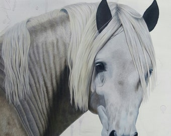 Giclee print of horse portrait drawing in colour pencils 'Andalusian Horse'