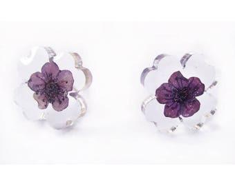 Earrings - plum jewel pressed flowers nature in colorful dried flowers