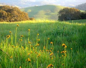 Little Flower In The Source Field