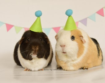 Guinea pig photoshoot party package small