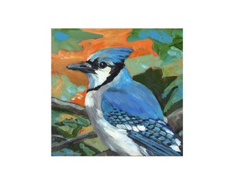 Blue Jay, limited edition art print