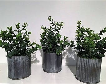 Rustic Potted Boxwood - Small
