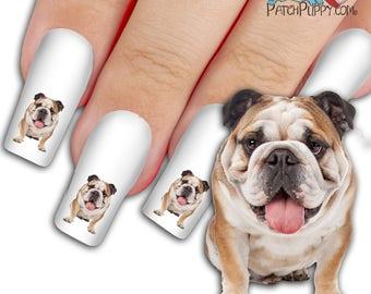 English Bulldog Woof Nail Art Kit - Dog Nail Decals - Waterslide Nail Decals - English Bulldog Nail Decals
