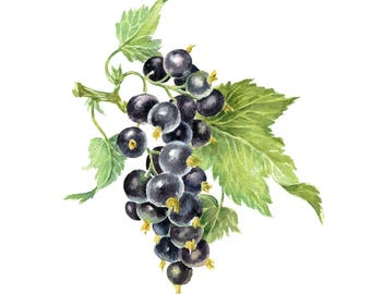 Printable Watercolour Art, Digital Download, Wall Art, Kitchen Art, Home Decor, Fruits Art, Black currant