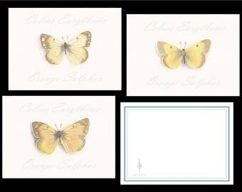 Butterfly Notecards (set of 3) Orange Sulphur Colias Eurytheme Recycled Watercolor Print Original Biology Nature Art SwinkLief