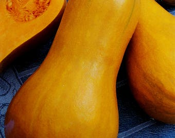 Pumpkin Arabatskaya, Vegetable Seed, Ukrainian Seeds