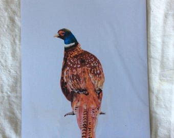 A4 print of original watercolour painting of a pheasant