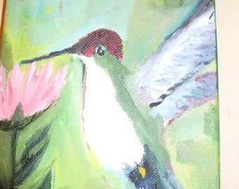 Hummingbird @ Spider Mum
