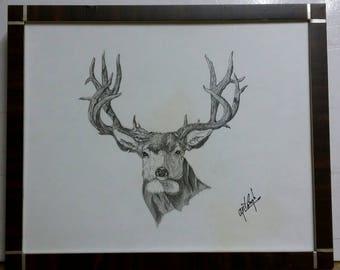 Deer Sketching