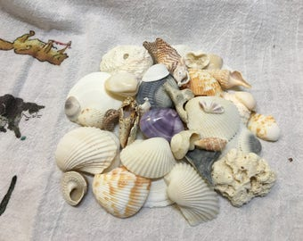 Bulk Seashells & Coral, 8 oz