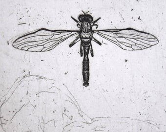 Robberfly - hand drawn etching