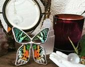 Real Moth Display. Boho Style Decor. Real Butterfly Display. Sunset Moth. Tabletop Display.  Butterfly Shadowbox Display. Housewarming Gift