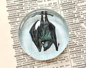 Bat Magnet - Vampire Bat Magnet - Animal Magnet - Jumbo Glass Magnet - Bat Gift - Refrigerator Magnet - Office Magnet