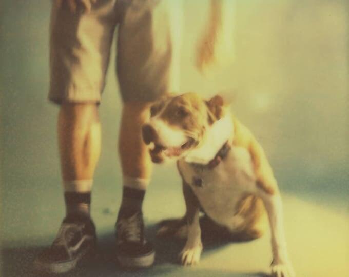Featured listing image: Pitbull print