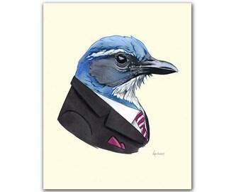 Western Scrub-Jay art print 8x10