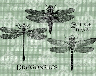 Digital Download, Dragonflies Set of 3, Insects Bugs Antique Illustration, Iron on Transfer, Digistamp, Transparent png