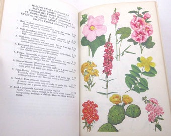 The Guide to Garden Flowers Their Identity and Culture Vintage 1950s Reference Book by Norman Taylor Illustrated by Eduardo Salgado